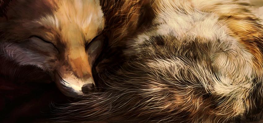 Foxy Dreams Strona Główna